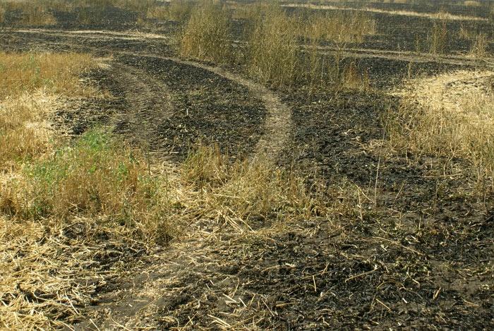 Пожар на поле