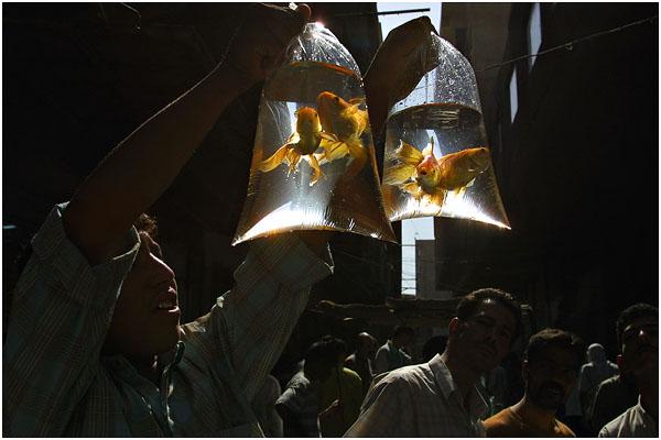 Сергей Максимишин. Продавец золотых рыбок. Багдад. Ирак. 2002 год