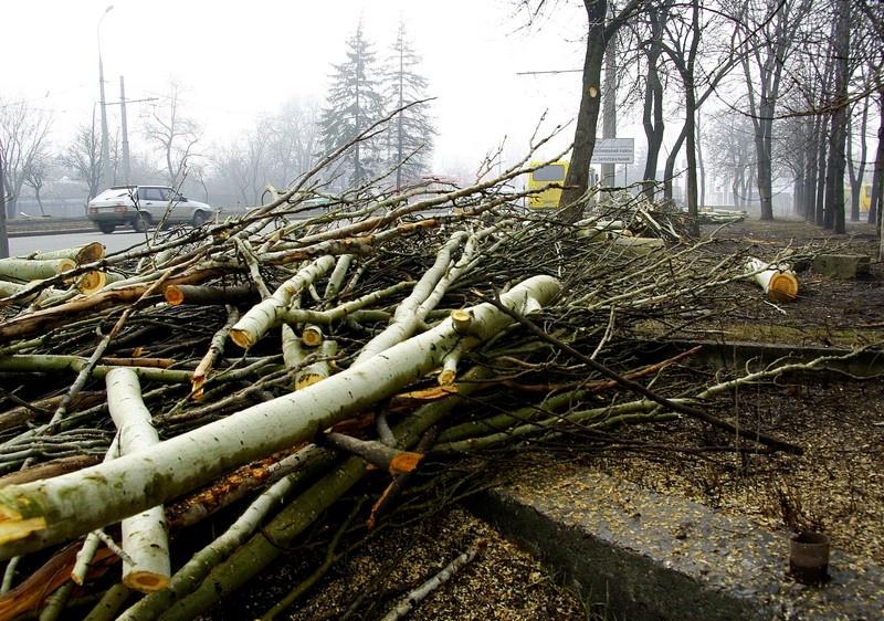 Город поверженных деревьев, или Донецк готовится к EURO 2012