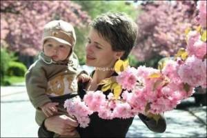 в Ужгороде ожидается пик цветения сакуры