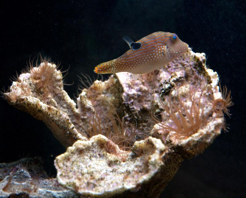 Севастопольский морской аквариум-музей