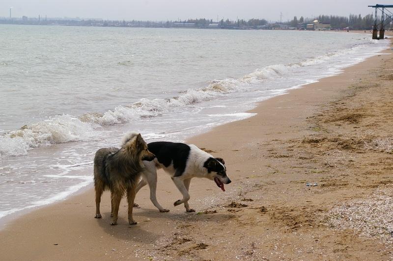 одесса, прогулка по пляжу