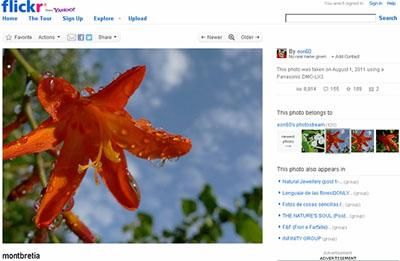 На Flickr загружено уже 6 миллиардов фотографий