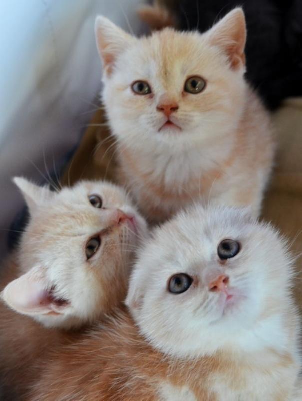Выставка кошек в Донецке