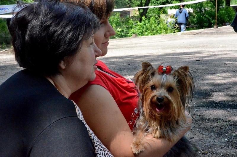 Счастливое детство выставка собак