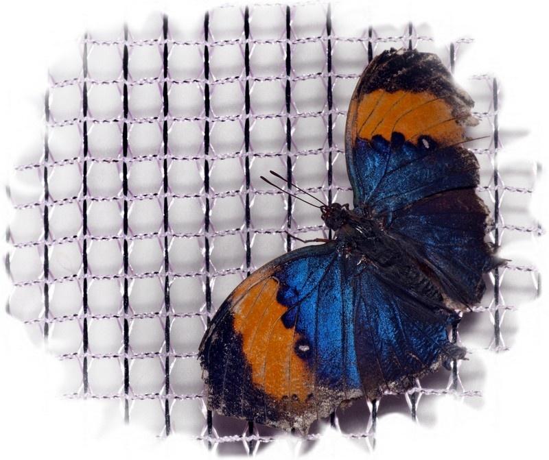 Cад экзотических бабочек в Донецке
