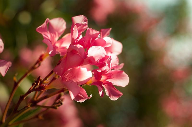 расцвели цветы