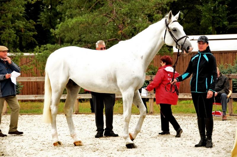 ветеринарный осмотр лошадей