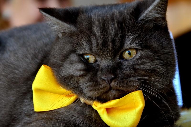 Международная выставка кошек в Донецке