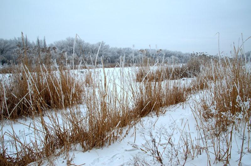 Зимний пейзаж, иней