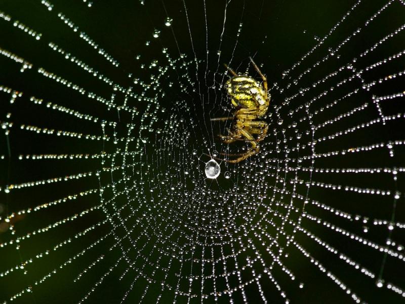 макро пауки