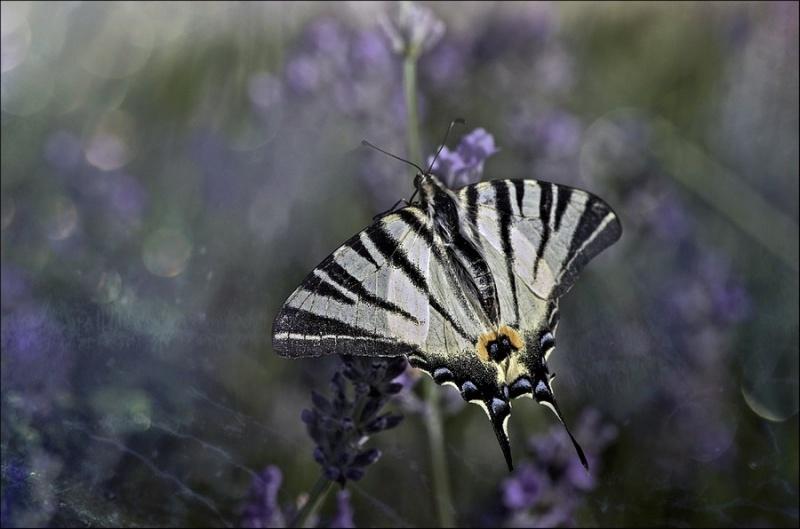 макро фото бабочки стрекозы мухи пауки